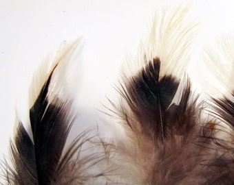 Organic cruelty free feathers  black with white tip body 24 qty