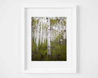 Utah aspens forest print - Green white nature photograph - Spring photo - Cabin wall art decor - Fine art photography - Woods landscape