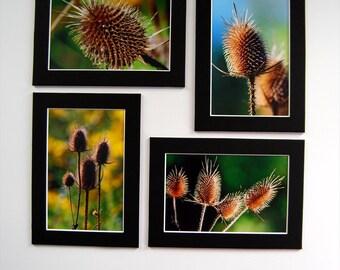 """Set of Fine Art Photos; Four autumn photos of thistles; 4""""x6"""" matted to 5""""x7""""; ready to frame; Seasonal Wall Decor"""