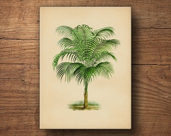 Tropical Palm Tree Canvas, Palm Leaf Wall Decor,  Palm Tree Print, Palm Leaf Wall Art, Palm Tree Art, Tropical Plant, Botanical Canvas Art