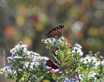 Butterfly & Bokeh Photo Gift Ideas
