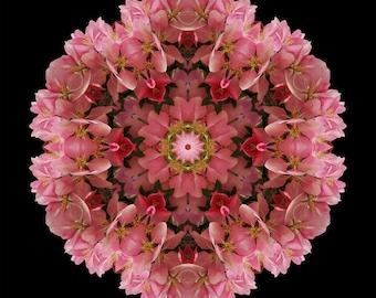 Flower Mandala Art Joy in Pink & Red - Bold As Spring
