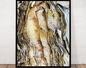 Bark Print, Bark Decor, Eucalyptus Bark, Bark Photography, Texture Print, Texture Wall Art, Bark Texture Photo, Tree, Tree Print Close-up