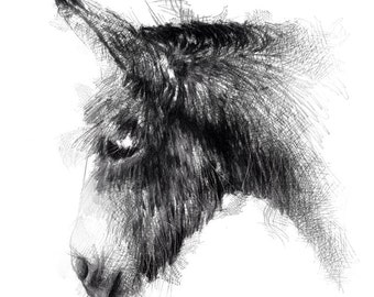 Donkey sketch | Limited edition fine art print from original drawing. Free shipping.