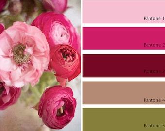 Ranunculus 2 Pink Flowers Fine Art Print Home Decor Wall Art