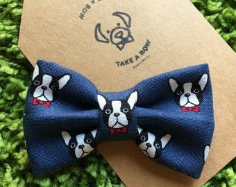 BOSSY THE BOSTON - Boston Terrier in Bowtie / Dog Bowtie / Pet Bowtie / Boston Terrier / Frenchie / French Bulldogs /