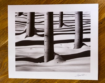 Black and white aspen trees - Landscape photography - Wall Art - Limited edition fine art print- Made in Colorado.