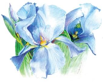 Iris in Springtime