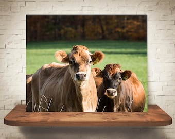 Jersey Cow Photograph - Fine Art Print - Color Photography - Wall Art - Wall Decor -  Farm Pictures - Farmhouse Decor - Cows