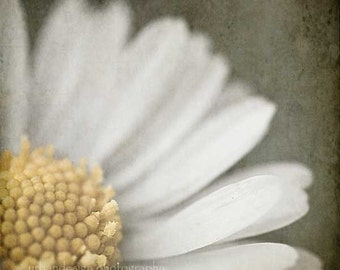 Daisy Nature Photography - as seen at the 2013 Oscars GBK Gift Lounge - yellow gray flower wall art, baby nursery