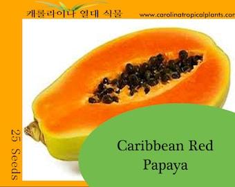 Red Caribbean Papaya seeds - 25 Seed Count