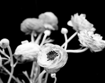 "Black And White Nature Photography, Ranunculus Flowers, Floral Wall Art, Dark Bold Decor, Black Wall Art, ""In Time"""