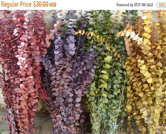 SUMMER WREATH SALE 1 lb. Preserved Eucalyptus- Rustic Wedding- Dried Floral Arrangement- Primitive Wedding Wreath- Fall Decor- Fall Arrangem