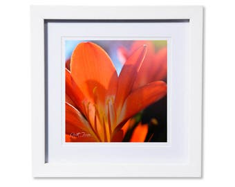 Orange Lily Photo Print or Canvas