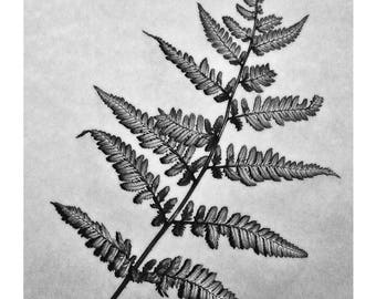 Fern black and white photographic print.