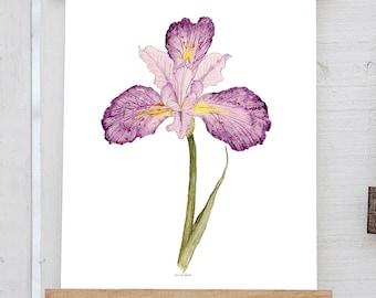 Iris Watercolor Print - February Birth Flower