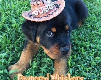 Dog_Cat Cowboy hat for cats and dogs (personalized) - red_black_ tan Cowboy Hat for Dogs and Cats
