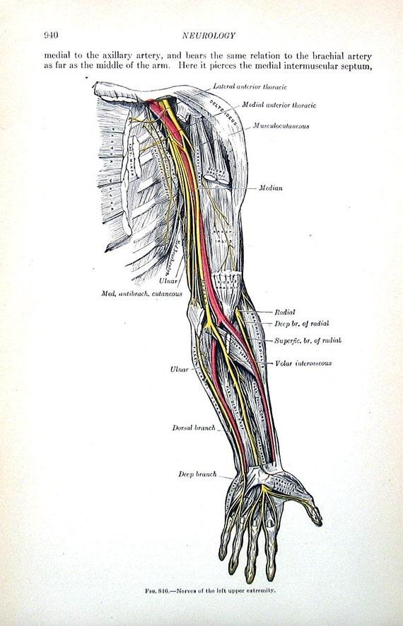 Groß Menschliche Systeme Galerie - Menschliche Anatomie Bilder ...