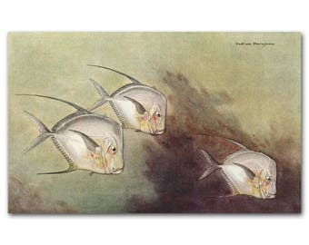 "Vintage Ocean Watercolor Print, 1930s Tropical Fish Art --- ""Moonfish or Opah"" Fish No. 197"