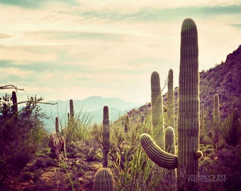 Southwest Dream - Southwest decor, desert photography, Arizona photo, cactus, fine art photograph, Southwest art