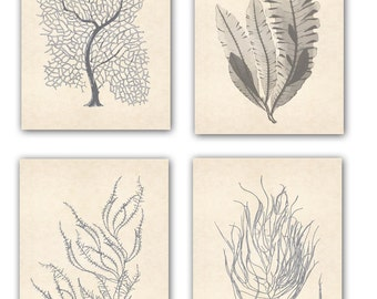 Sea fan Art, Seafan poster, Nautical Art, Seafan coral prints, modern vintage inspired  by coral, kelp, gorgonian, seaweed, seashore prints