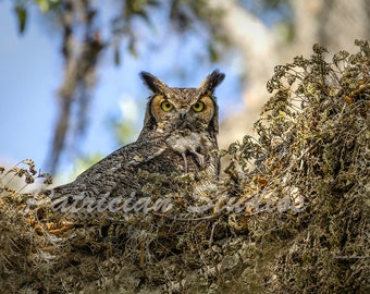 Great Horned Owl and Rodent