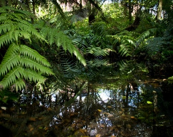 Green ferns photography,fineart print,nature wall art,home decor,botanical,interior design,spring,wall hanging,plants,reflected,water,nature