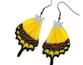 Real Butterfly Earrings (Lycophron Hindwing - E154)