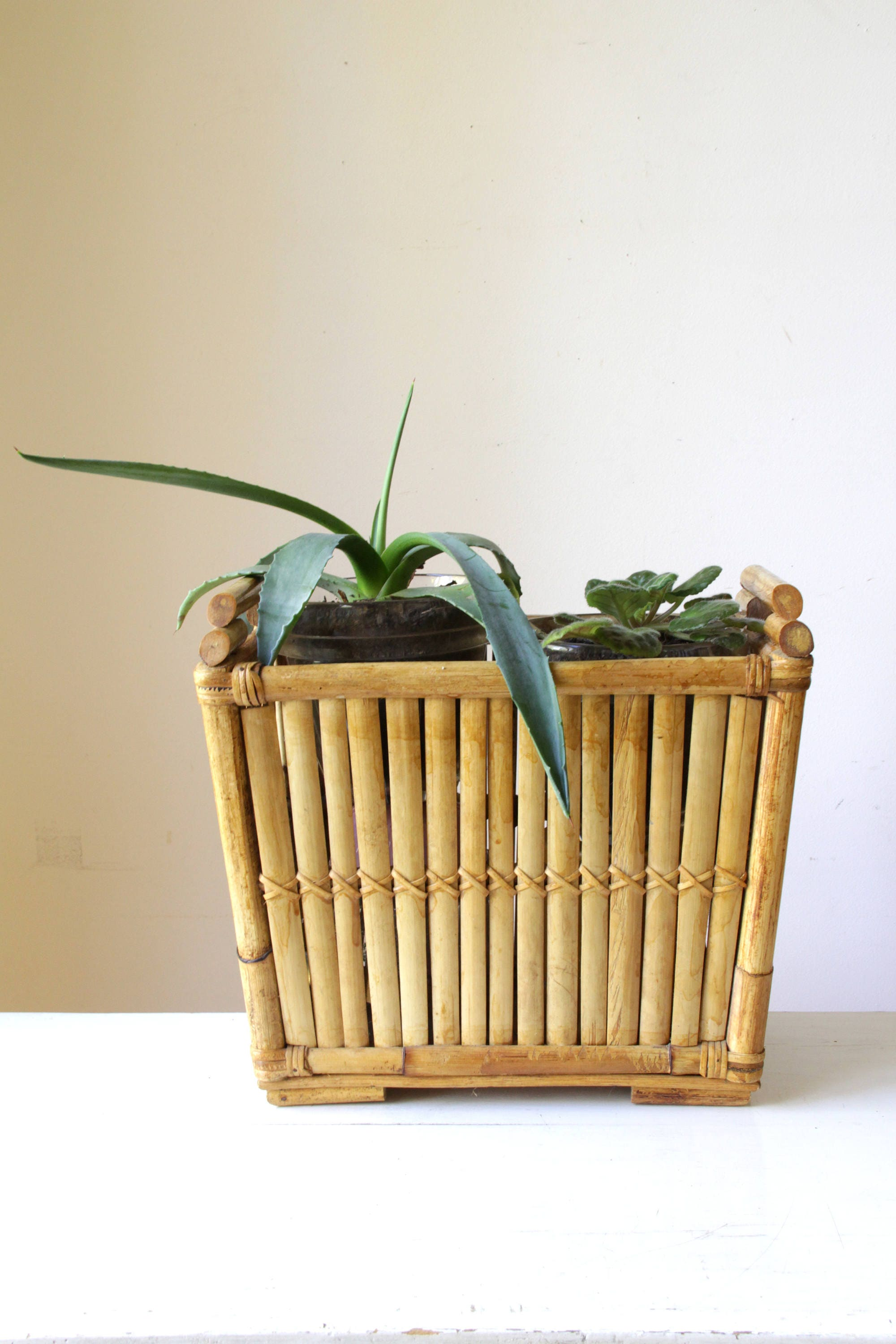 bamboo subscribe organic craft easy planters planter flora upright email