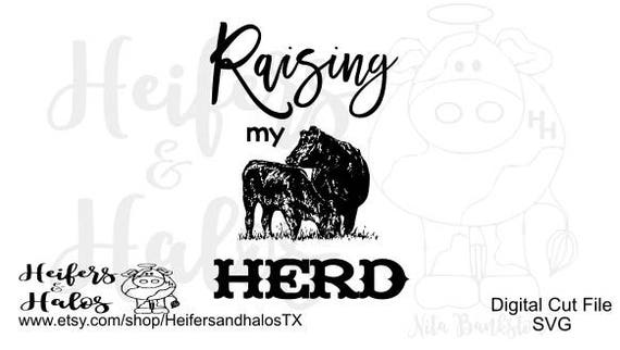 Heifers And Halos