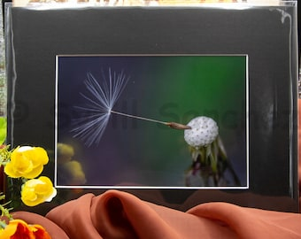 Dandelion Seed - Matted Print