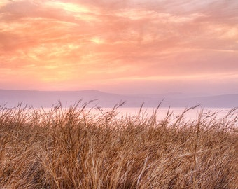 Sea of Galilee, Israel Photography, Sea Of Galilee Sunset And Wheat, Fine Art Photography, Holy Land Photo, Israel Photo