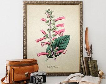 Botanical Print, Bell Flower Print, Flower Print, Bell Flower Botanical Print, Flower Art Print, Decorative Botanical Reproduction FL092