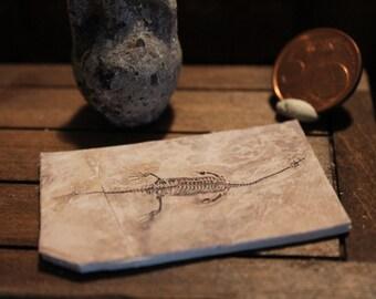 Miniature find  fossil