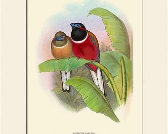 Bird Print, Trogon, Tropical Bird, John Gould, Art Print with Mat, Note Card, Natural History Illustration, Wall Art, Wall Decor