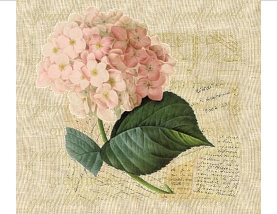 Pink hydrangea french decor instant clip art digital download for Tessuti arredamento francesi