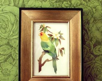 Parrot Art Print – Carolina Parakeet – Extinct Bird Illustration – 4x6 Print – Bird Lover Gift