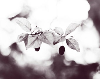 Nature Fine Art Photography Print, Large Leaf Wall Art Decor, Tree Wall Art- Daylight Shimmer in BW
