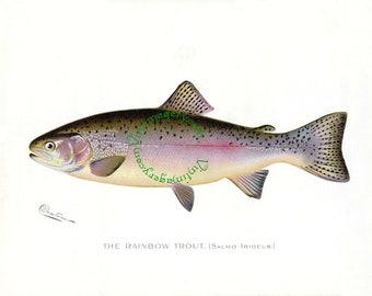 Rainbow Trout print, by S. F. Denton, 1903: Vintage Fish print digital image