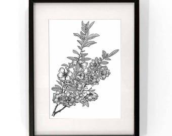 Full Bloom - Art Print / Illustration