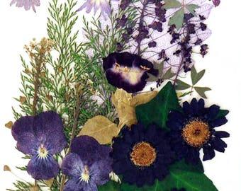 Pressed flowers pansy, star flower, torenia, marguerite, alyssum, lobelia, foliage ivy for floral art, craft, card making, scrapbooking