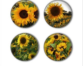 Sunflower magnets or sunflower pins, refrigerator magnets, fridge magnets, office magnets