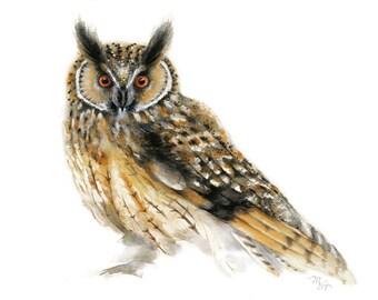 Bird watercolor painting - Owl Art Print. Nature or Bird Illustration. Custard, Black and White