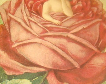 Vintage/Antique Embossed Fantasy Postcard (Child In A Rose)