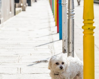 Paris Photography - The Patient Little Dog, Paris Fine Art Photo, French Home Decor, Large Wall Art, Gallery Wall Art
