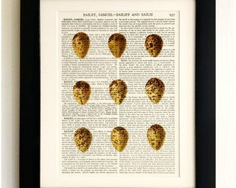 FRAMED ART PRINT on old antique book page - 9 Eggs, Vintage Wall Art Print Encyclopaedia Dictionary Page