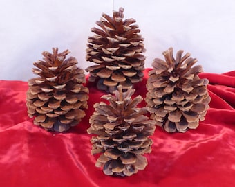 Pine Cone Fatties! 4 Large Pine Cones with Light Shimmer