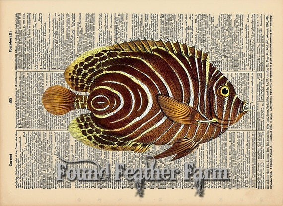 """Vintage Antique Dictionary Page with Antique Print """"Brown Striped Ocean Fish"""""""