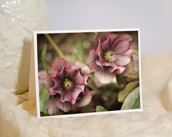 Hellebore Photo Notecard - Pink Flower Greeting Card - Floral Photography - Winter Garden - Pink Flowers - Blank or Personalized Card