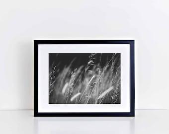 "Fine Art Wall Decor Black & White Print: Simplicity II (12"" x 10"")"